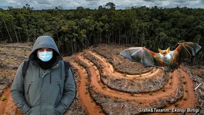 """Bilim İnsanları: """"Doğaya gelişigüzel davranış daha fazla salgın hastalığa yol açabilir!"""""""