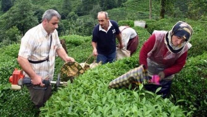 Çiftçi-Sen: Çay hasadına engel değil çözüm! Hemen şimdi!