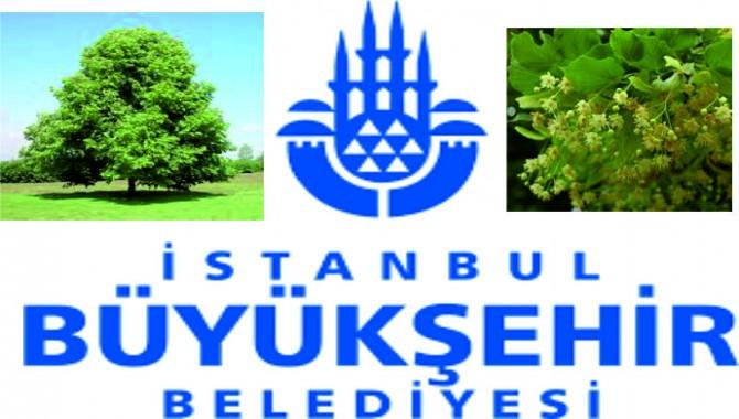 İstanbullu şimdi de ağacını seçecek