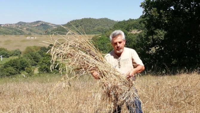 KARÇEV Buğday hasatını yaptı