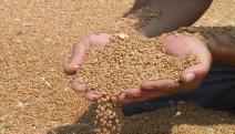 """Çiftçi-Sen : """"Tohum desteği yetmez! Gıda egemenliği hemen şimdi"""""""