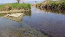 Ege'nin Bir hayat damarı daha can çekişiyor: Büyük Menderes Nehri