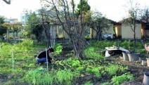 Gölcük Belediyesi Hobi Bahçelerinde Güzellikler Yetişiyor