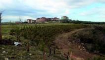 Kandıra'nın eski çöplüğü ''Kent Ormanı'' oluyor