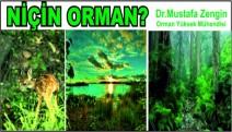 Niçin Orman?