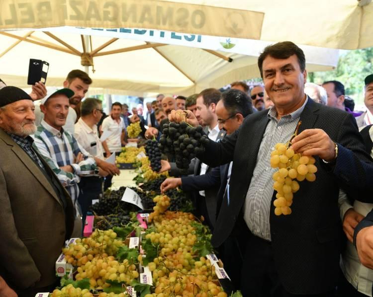 Osmangazi'de Karabalçık Üzüm Festivali