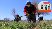 Tarım işçisi kadın: 'Korkuyoruz ama, aç kalmasın çocuklarımız diye gidiyoruz'