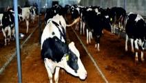 Tarımsal Kümelenme Modeli verim rekorları kırıyor.