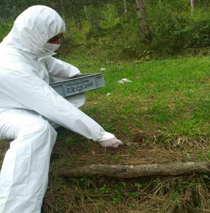 Gölcük Orman İşletme'den Biyolojik Mücadele