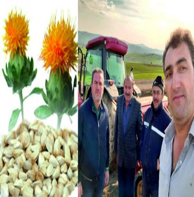 Kocaeli'de Aspir Tohumları Toprakla Buluştu